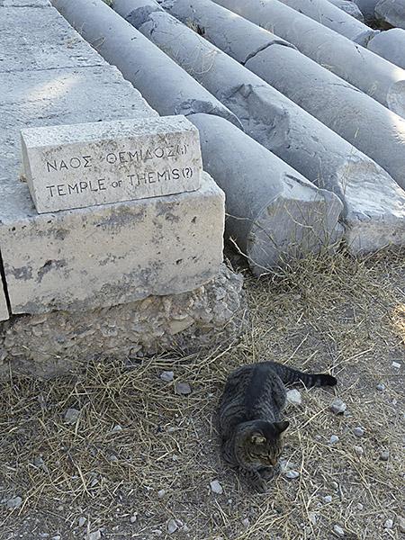 chat gris au Parthénon