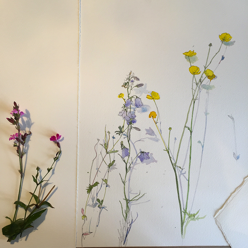Wild flowers - progress