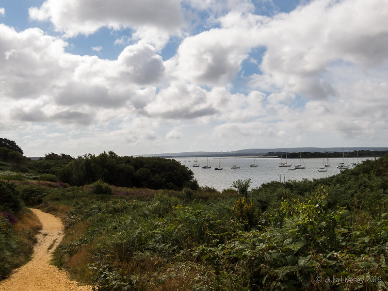 Looking over Poole Harbour