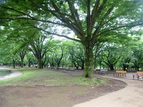 jp16-Tokyo-Parc Yoyogi (1)