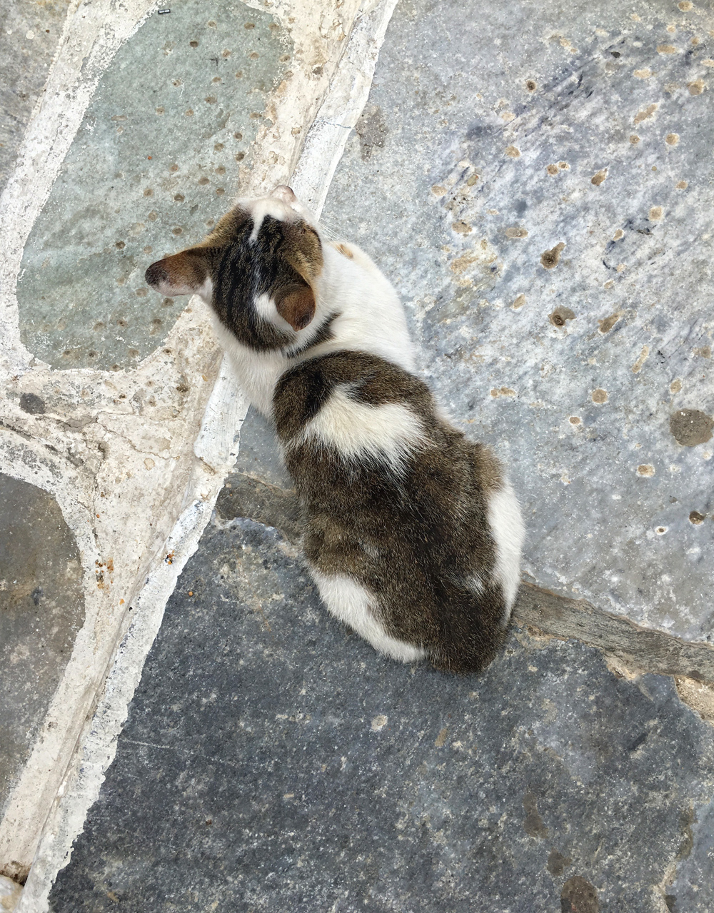 cat_Pirgos_Tinos