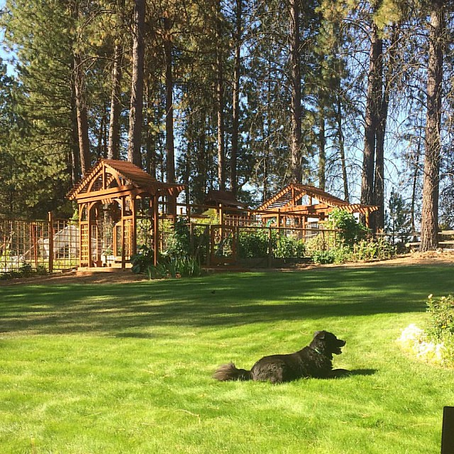 My in-law's good-looking garden (and Bear Cub).