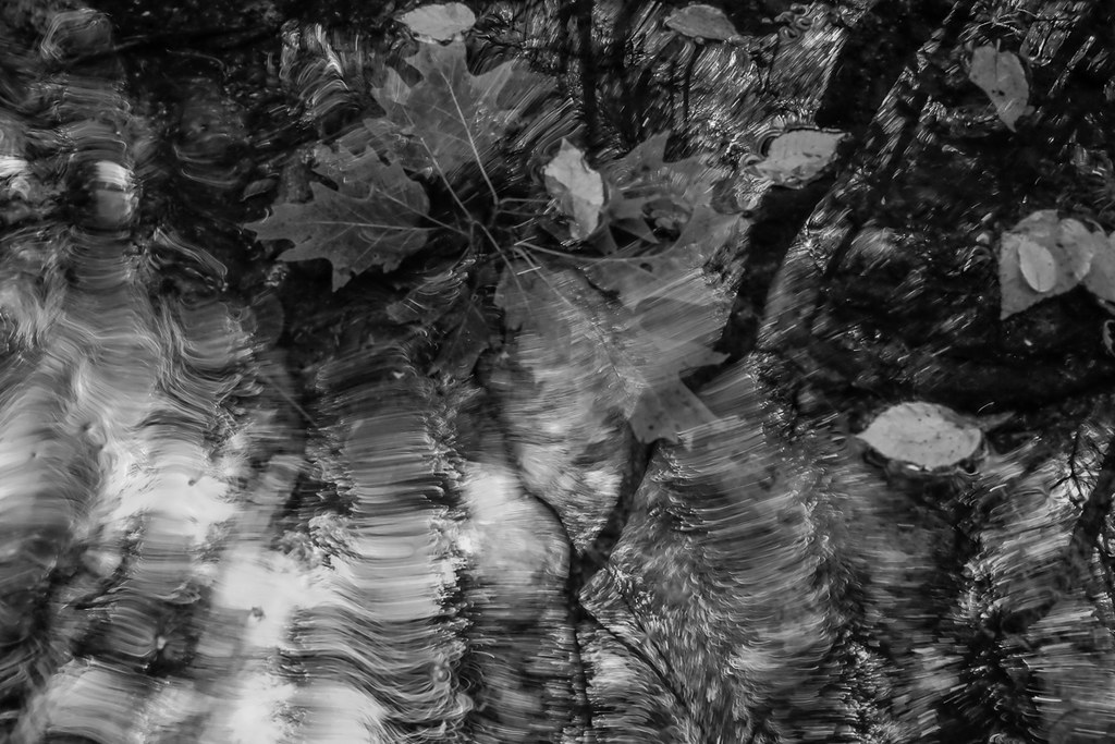 Oak leaves in turbulent reflection