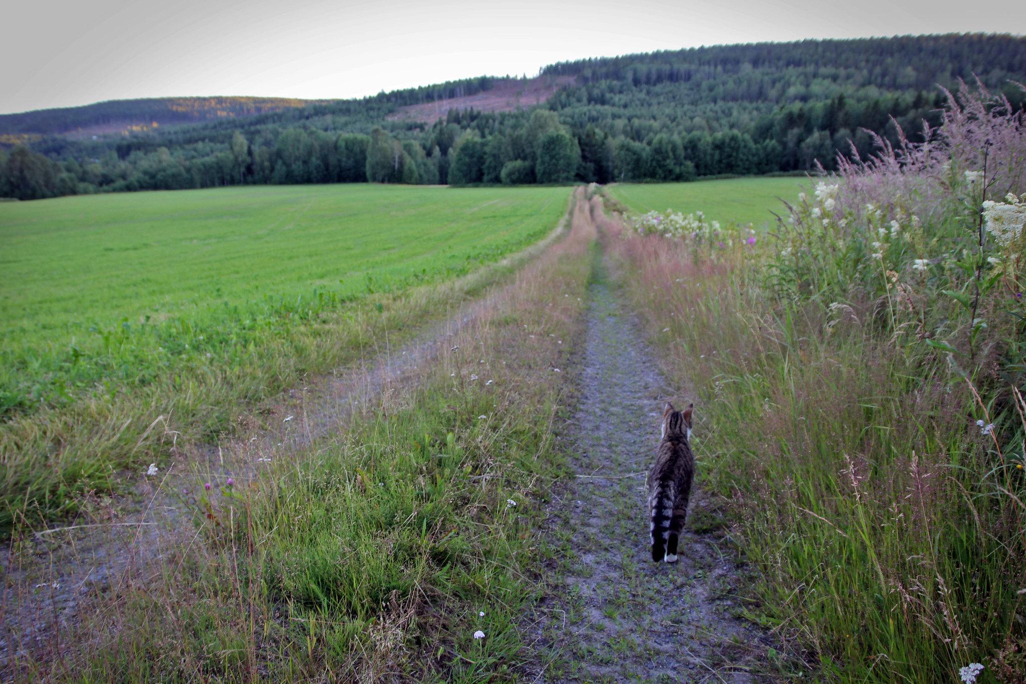 Katt på promenad :: Hej Emmisen