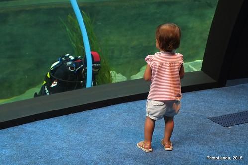 La niña y el submarinista