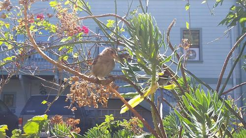 Port Townsend Bird