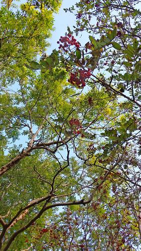 Rowan & birch