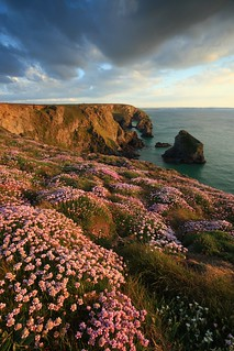 Sea Thrift at Bedruthan | by markgeorgephotography.co.uk