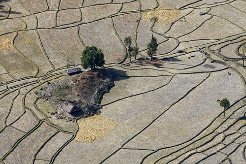 Aerial View of Rice Fields | by United Nations Photo