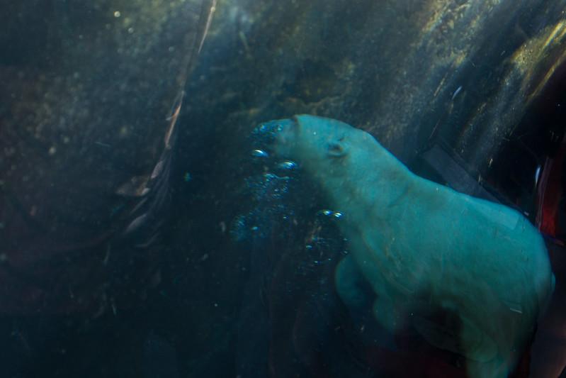Looking into the seal enclosure, Assiniboine Zoo, Winnipeg, Manitoba | packmeto.com