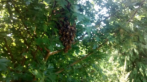 late swarm July 16 1
