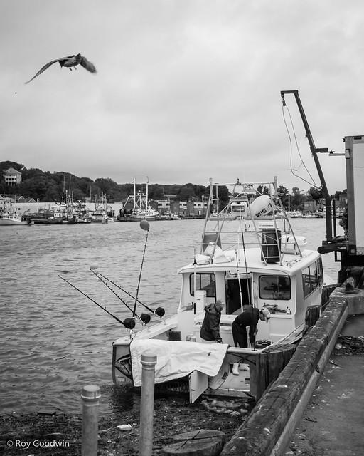 Gloucester Fish Pier