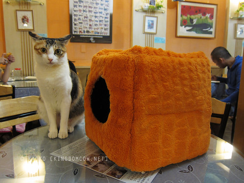 Taipei Travel Diary: Cafe Dog & Cats | by kaoko