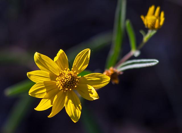 Flower-1-7D1-091616