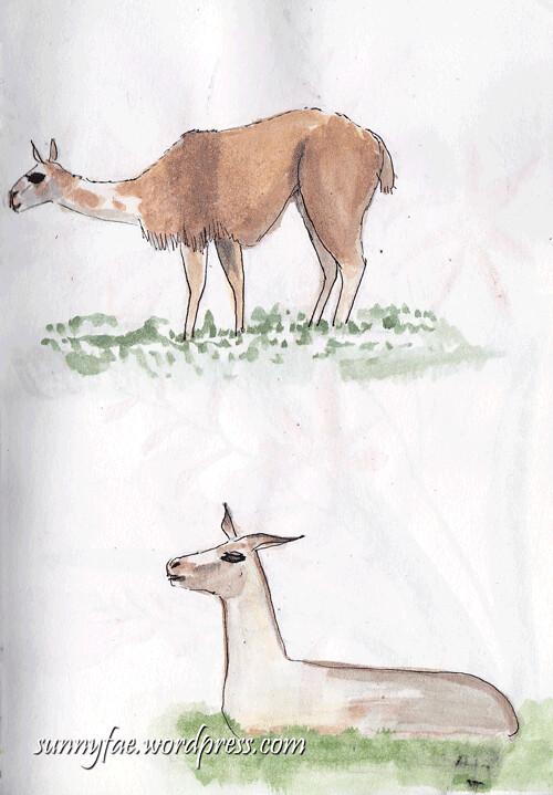 lama-sketch-2