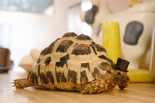 Tortoise in a Top Hat | by StarsApart