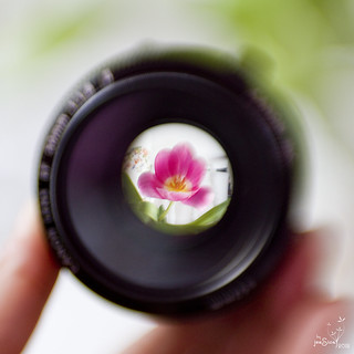 Through The Lens | by { jess }