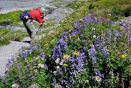 Flowers to Photo by Jim | by alpenglowtravelers