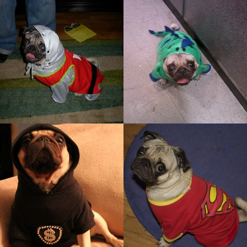 Pug costumes | by LittleRedKitchen