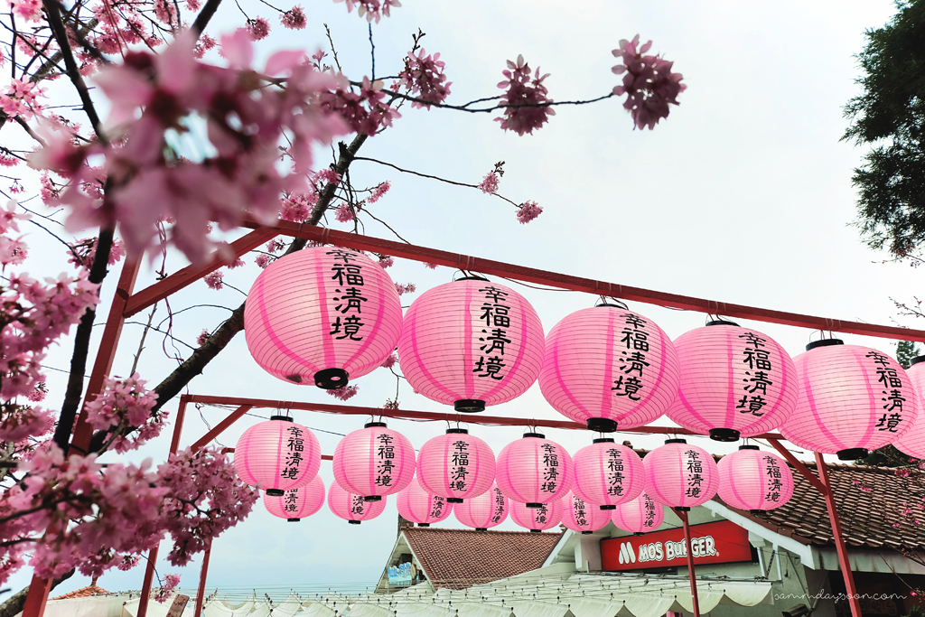 pink-lanterns-cingjing-farm