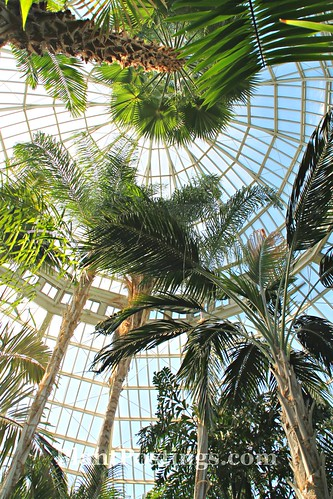 1 conservatory