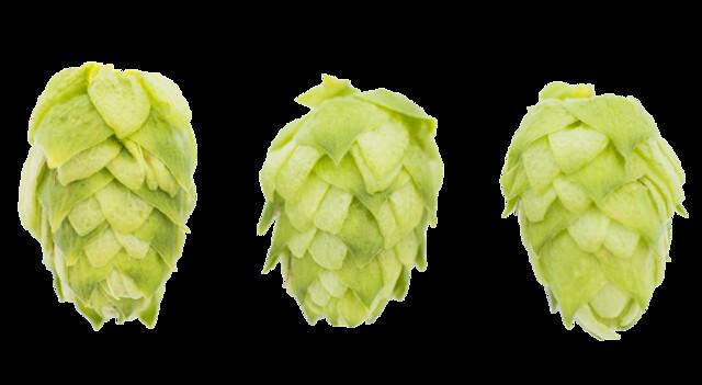 hop_varieties
