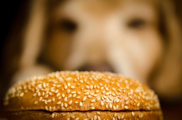 Give Your Dog A Bagel Day