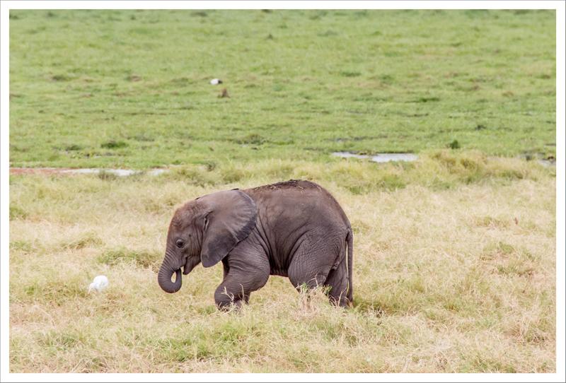 Amboseli-70