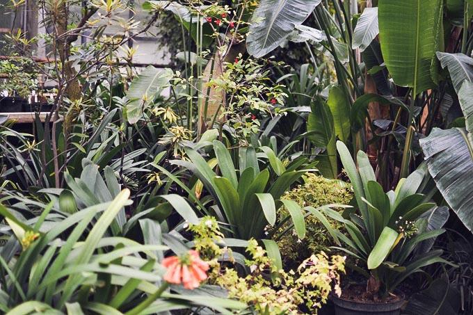 botanic_garden_midi_dress-4