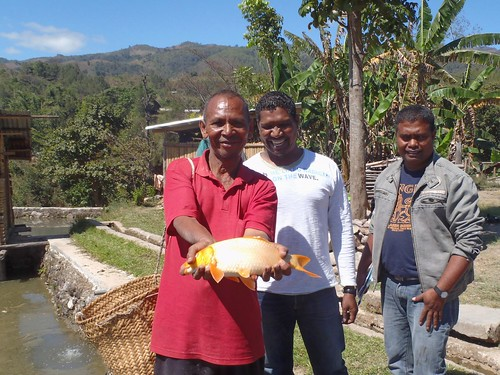Farmer shows common carp caught from his farm pond in Aileu, Timor-Leste. Photo by Jharendu Pant, 2011.