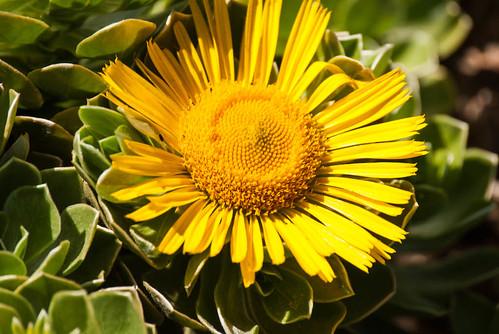 Flower Garden at Getty