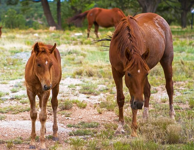 Horses-7_7d1__210716