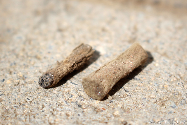 These are old old cigarette butts we 'excavated' from our garden. They've been lingering beneath metres of soil and building rubble for years and are not even close to decomposing.