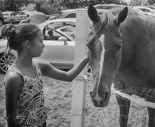 Horse love #dogwood52 #dogwoodweek43