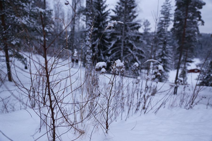 Nuuksio talvi
