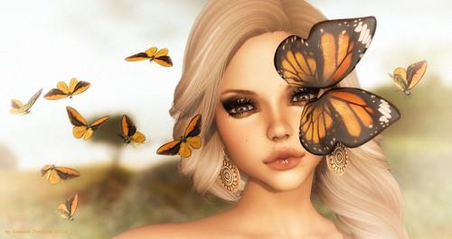 Butterfly Solo