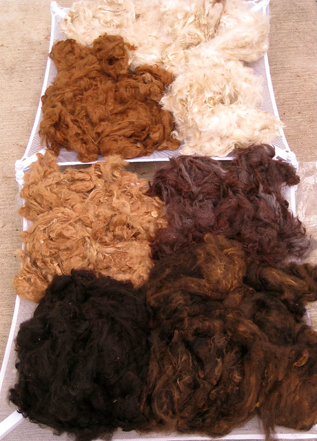 palette of alpaca