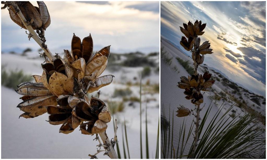 dried flowers