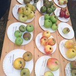 20161002 Fruithappening Roeselare