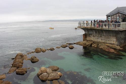 160703f Monterey Bay Aquarium _053