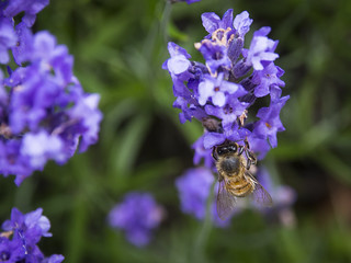 Busy Bees-2 | by Gareth Hart