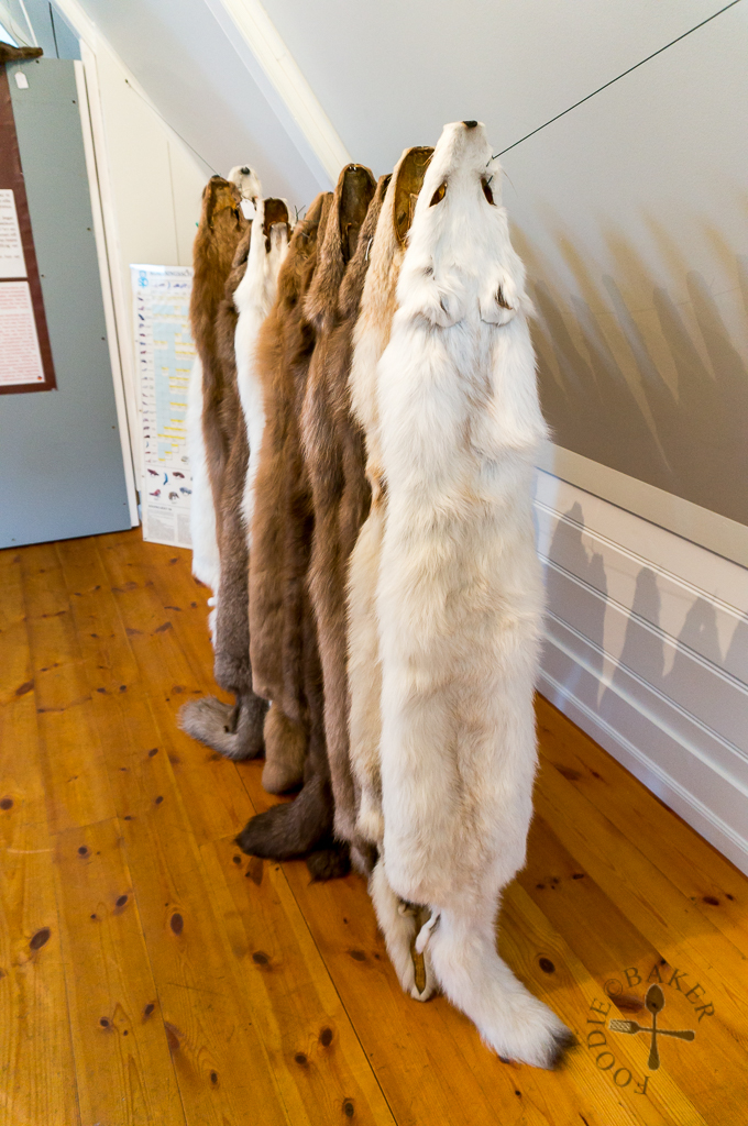 Súðavík Arctic Fox Centre