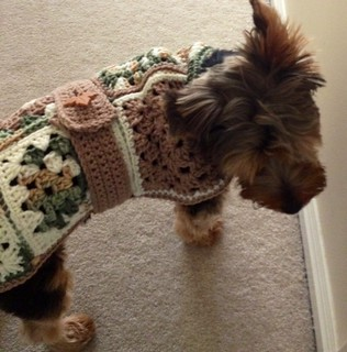 Free Crochet Granny Square Dog Sweater : dog sweater Bev Matheson Flickr