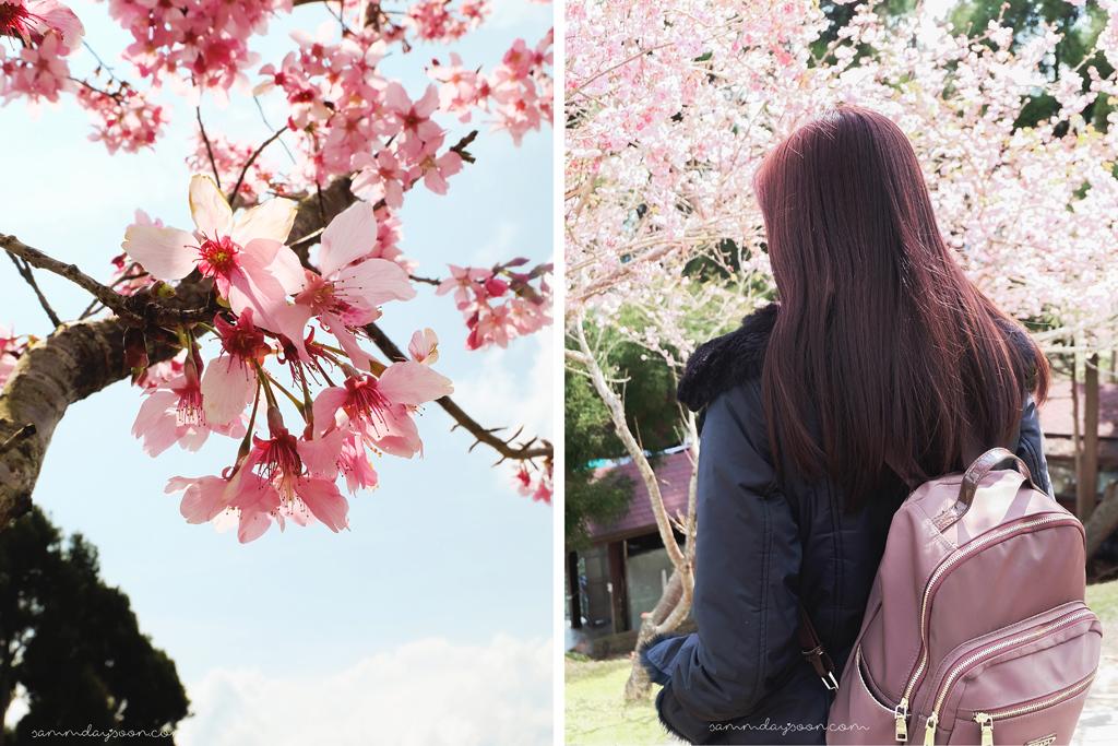 cherry-blossom-cingjing-farm-selfie