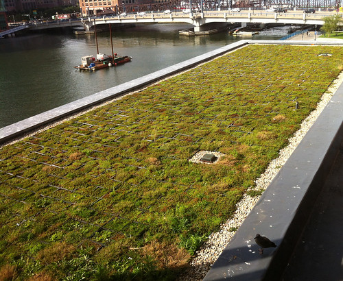 Boston Childrens Museum Green Roof | by tim @ BCM