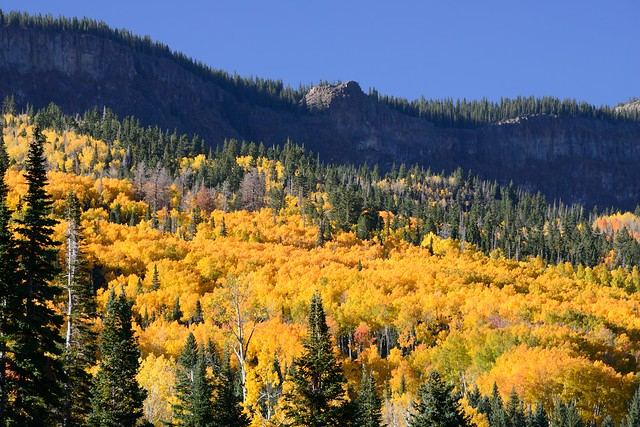 Radiant Aspen on Boulder Mountain