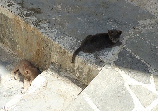 deux chats dans les escaliers de Hora