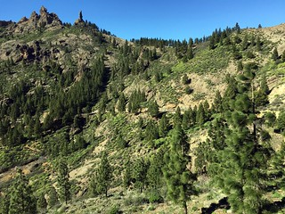 Gran Canaria - Roque Nublo's surroundings (The Friar)