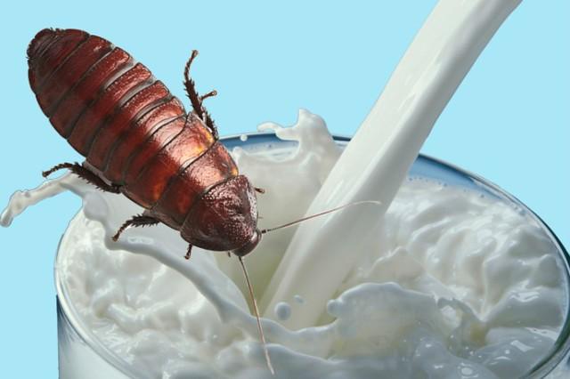 0001lechedecucaracha