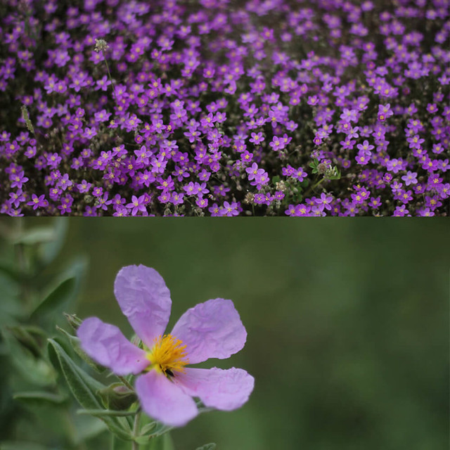 flora Andújar